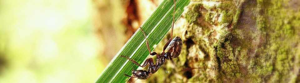 odstraniti mravlje